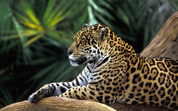 40 Beautiful Animal Pictures in the Rainforest 19