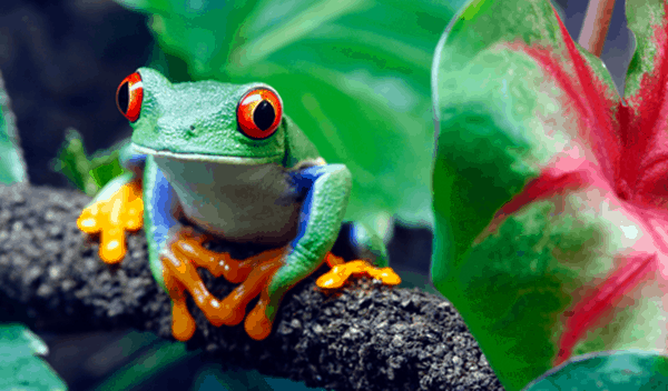 40 Beautiful Animal Pictures in the Rainforest 2