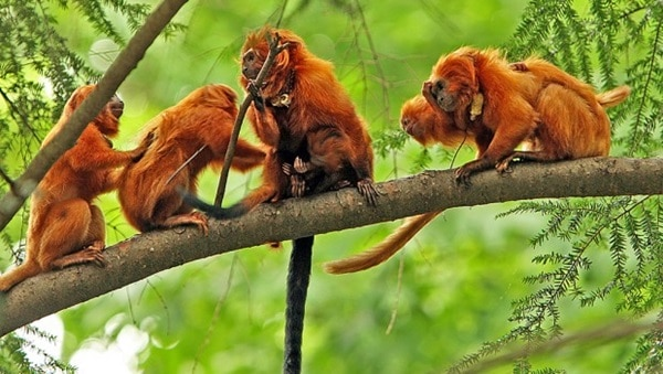 40 Beautiful Animal Pictures in the Rainforest 26