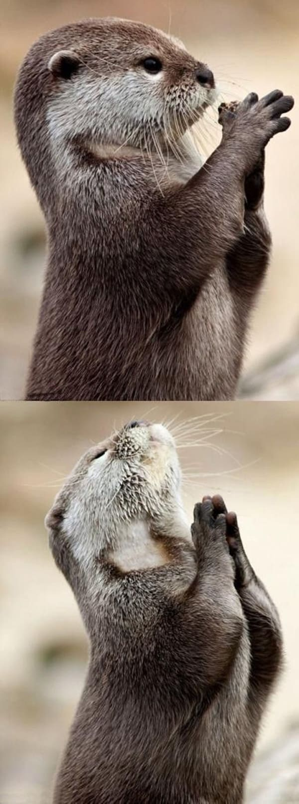 40 Pictures of Funny Cool Animals 19