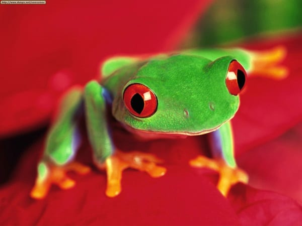 40 Really Amazing Tree Frog Pictures 12