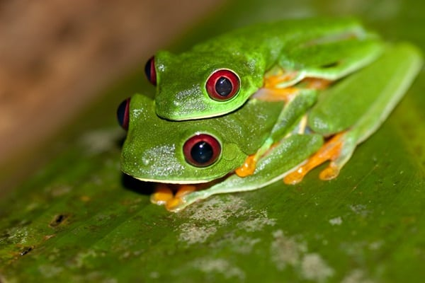 40 Really Amazing Tree Frog Pictures 14