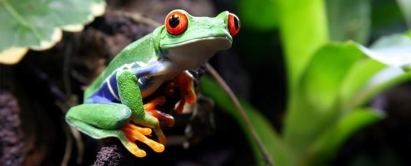 40 Really Amazing Tree Frog Pictures 15