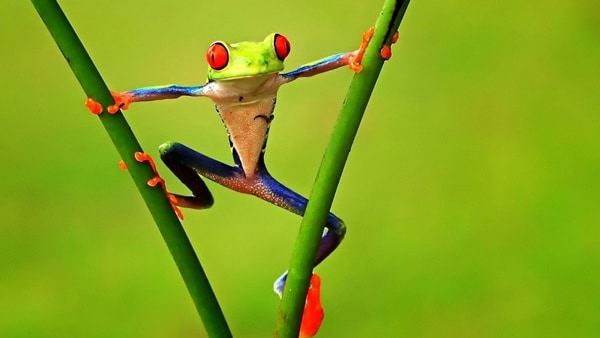 40 Really Amazing Tree Frog Pictures 19