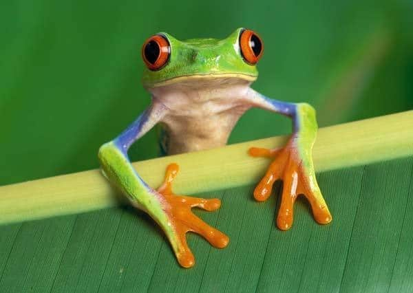 40 Really Amazing Tree Frog Pictures 2