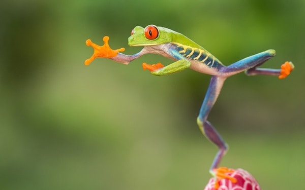 40 Really Amazing Tree Frog Pictures 20