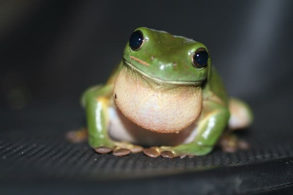 40 Really Amazing Tree Frog Pictures 28