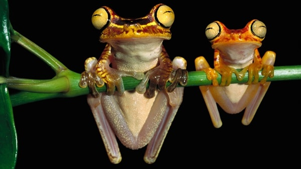 40 Really Amazing Tree Frog Pictures 29