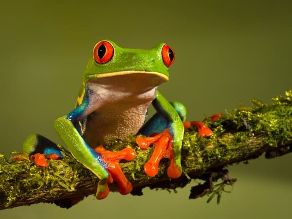 40 Really Amazing Tree Frog Pictures 3