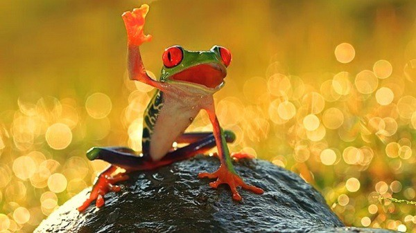 40 Really Amazing Tree Frog Pictures 37