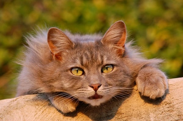 40 Unbelievable Beautiful Cats you Wish to Have 10