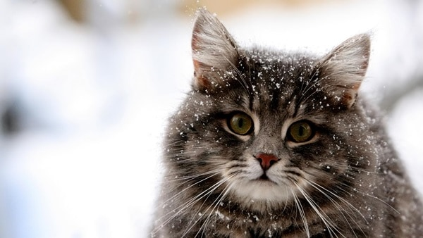 40 Unbelievable Beautiful Cats you Wish to Have 30