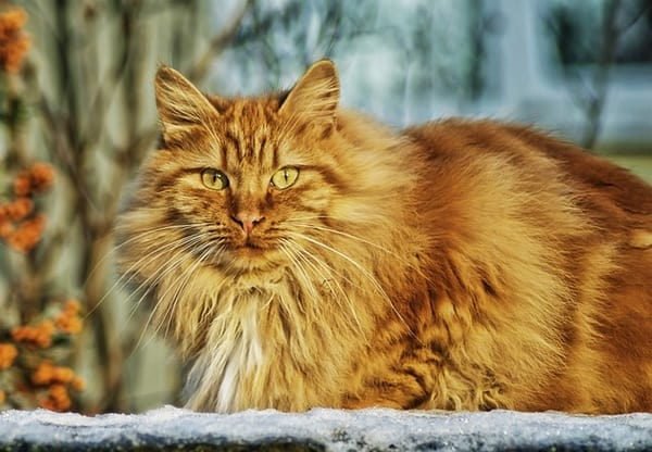 40 Unbelievable Beautiful Cats you Wish to Have 9