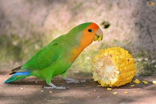 9 Pet Birds for Kids 7