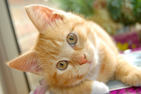 Causes of Sudden Death in Cats 2