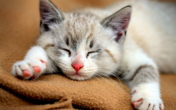 Causes of Sudden Death in Cats 3