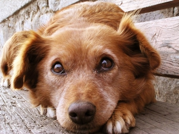 Causes of Sudden Death in Dogs 1