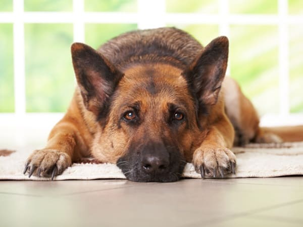 Causes of Sudden Death in Dogs 2