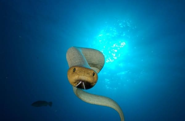 mazing Facts about Sea Snakes 6