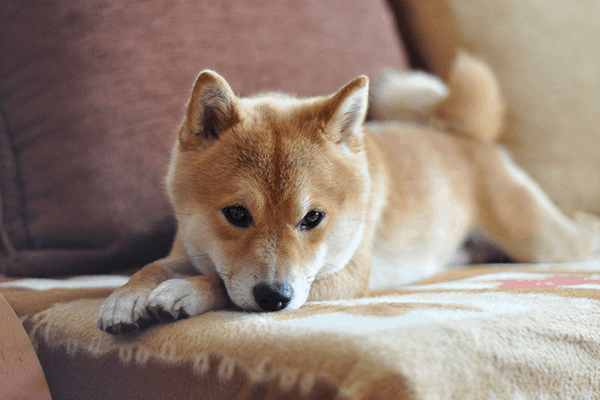 Cleaning Tips every Dog Owner should Know1