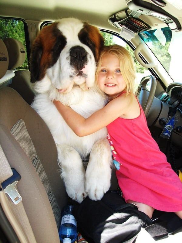 15 Biggest Dogs in the World 10b
