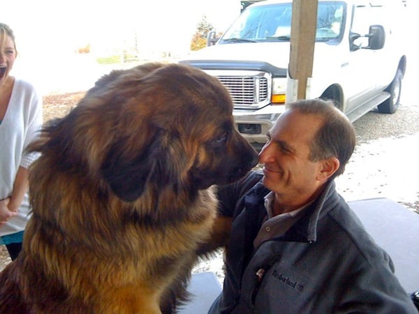 15 Biggest Dogs in the World 7
