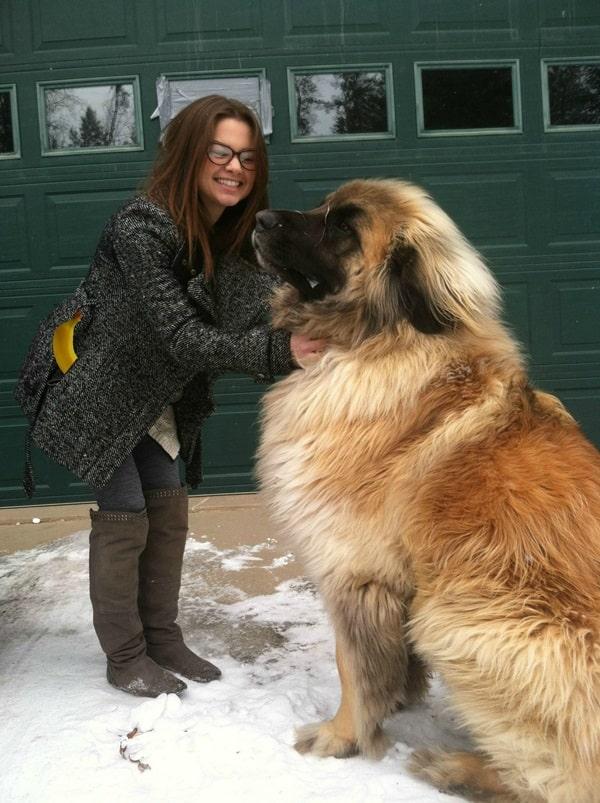 Worlds biggest dog