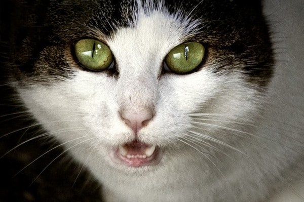 40 Animal Horror Expression Pictures 14