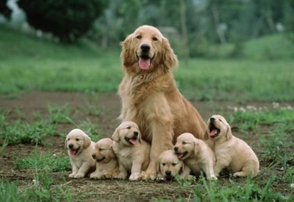 40 Big Dogs with their Small Puppies 1