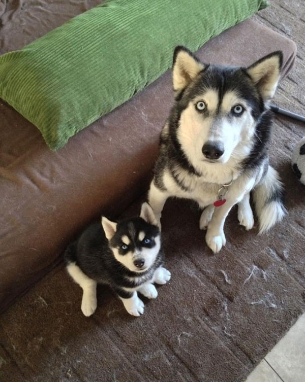 40 Big Dogs with their Small Puppies 13