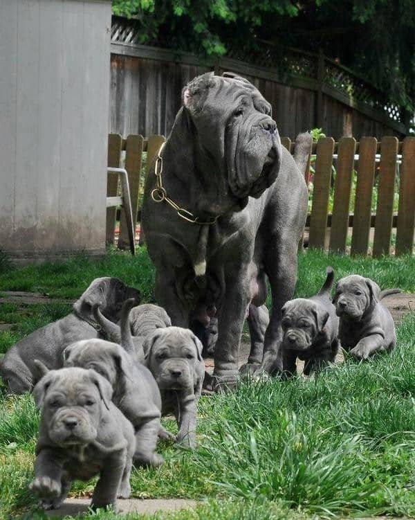 40 Big Dogs with their Small Puppies 14