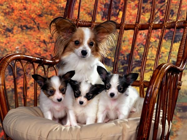 40 Big Dogs with their Small Puppies 18