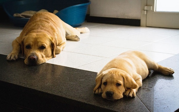 40 Big Dogs with their Small Puppies 19