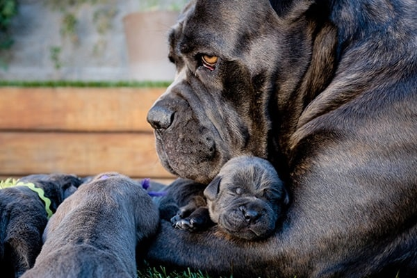 40 Big Dogs with their Small Puppies 21