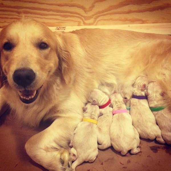 40 Big Dogs with their Small Puppies 22
