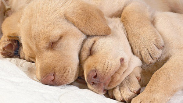 40 Big Dogs with their Small Puppies 23
