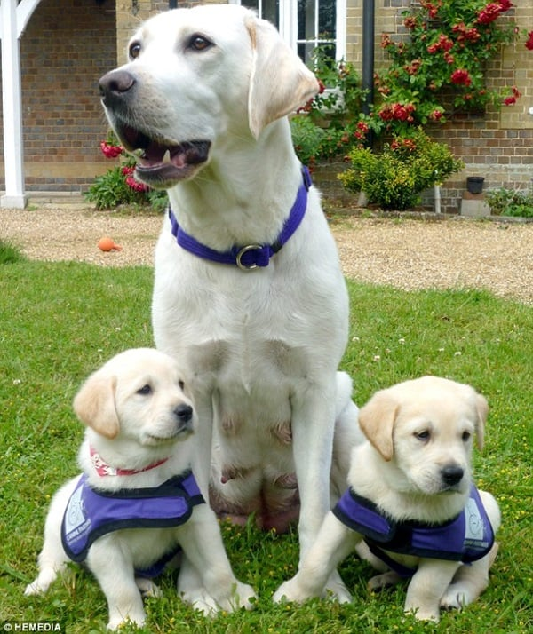 40 Big Dogs with their Small Puppies 26