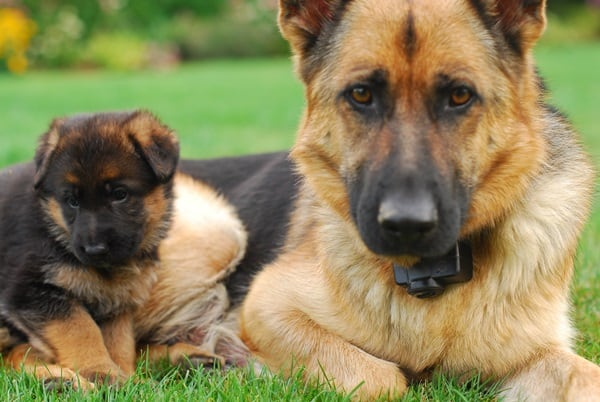 40 Big Dogs with their Small Puppies 27