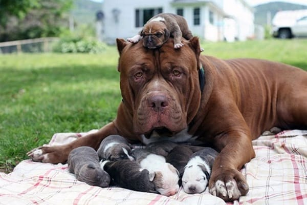 40 Big Dogs with their Small Puppies 29