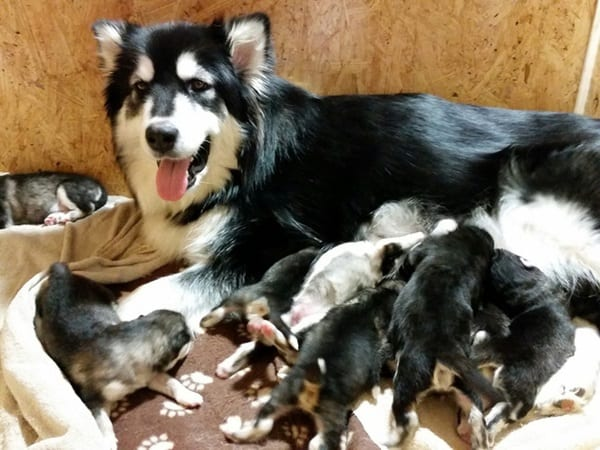 40 Big Dogs with their Small Puppies 3
