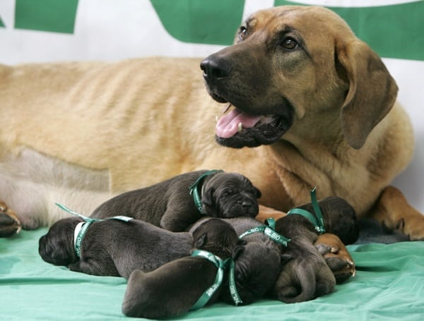 40 Big Dogs with their Small Puppies 30