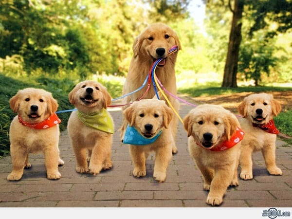 40 Big Dogs with their Small Puppies 5