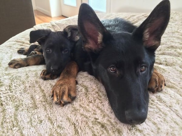 40 Big Dogs with their Small Puppies 7