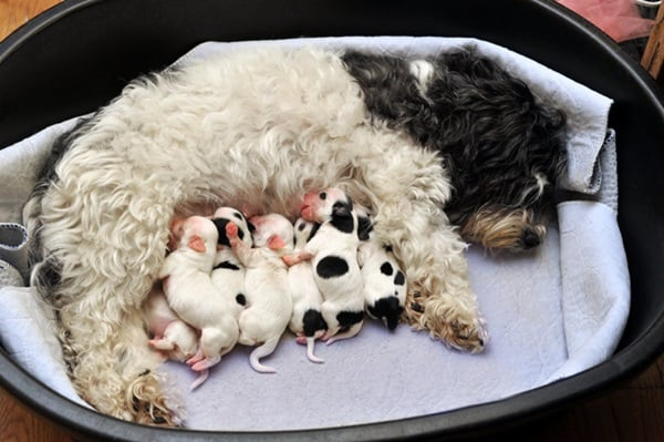 40 Big Dogs with their Small Puppies 9