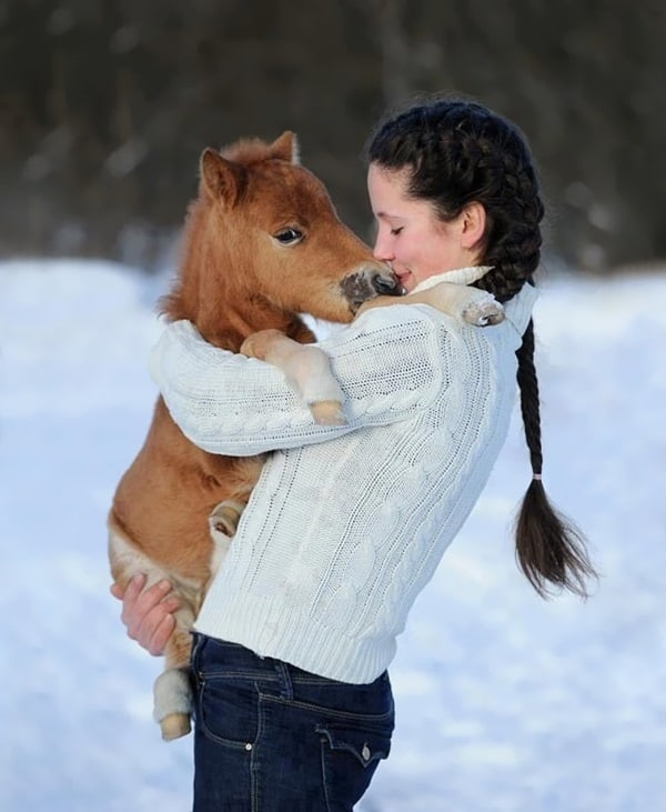 30 Cute Miniature Horses Picture 17