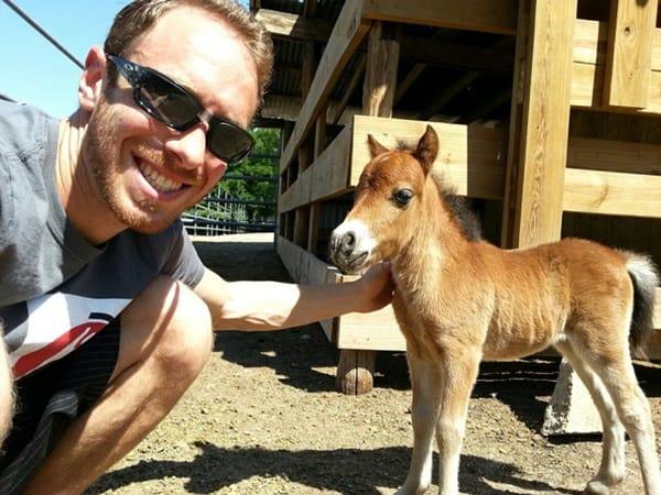 30 Cute Miniature Horses Picture 21