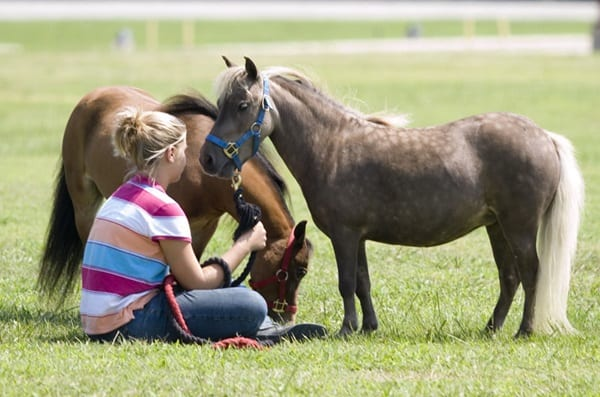 30 Cute Miniature Horses Picture 7