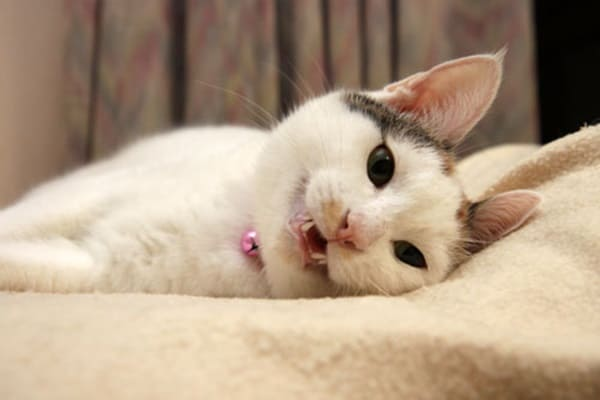 30 Cute Smiling Cat Pictures 12