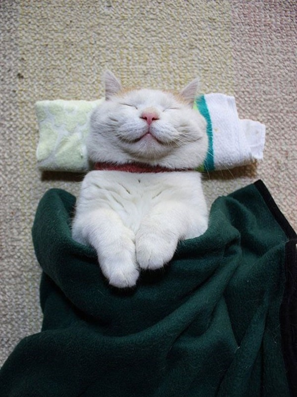 30 Cute Smiling Cat Pictures 14