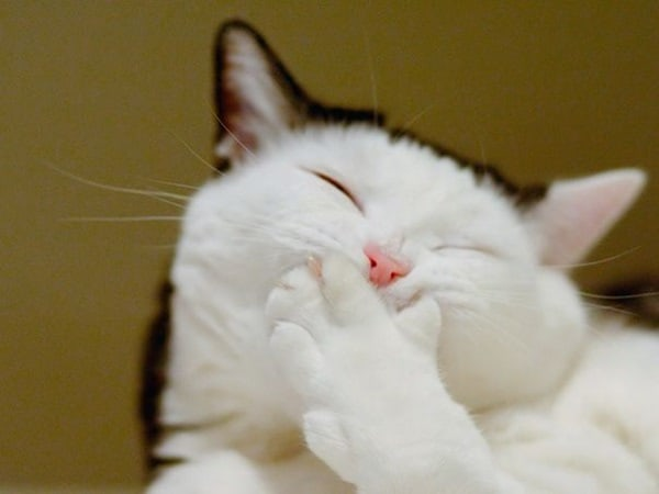 30 Cute Smiling Cat Pictures 15